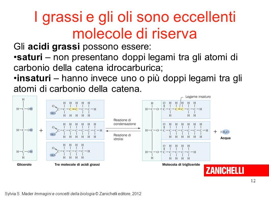 I grassi e gli oli sono eccellenti molecole di riserva