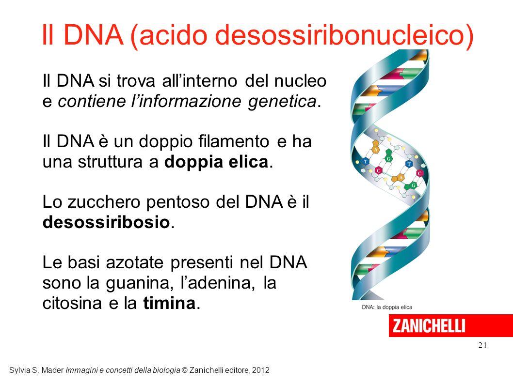 Il DNA (acido desossiribonucleico)