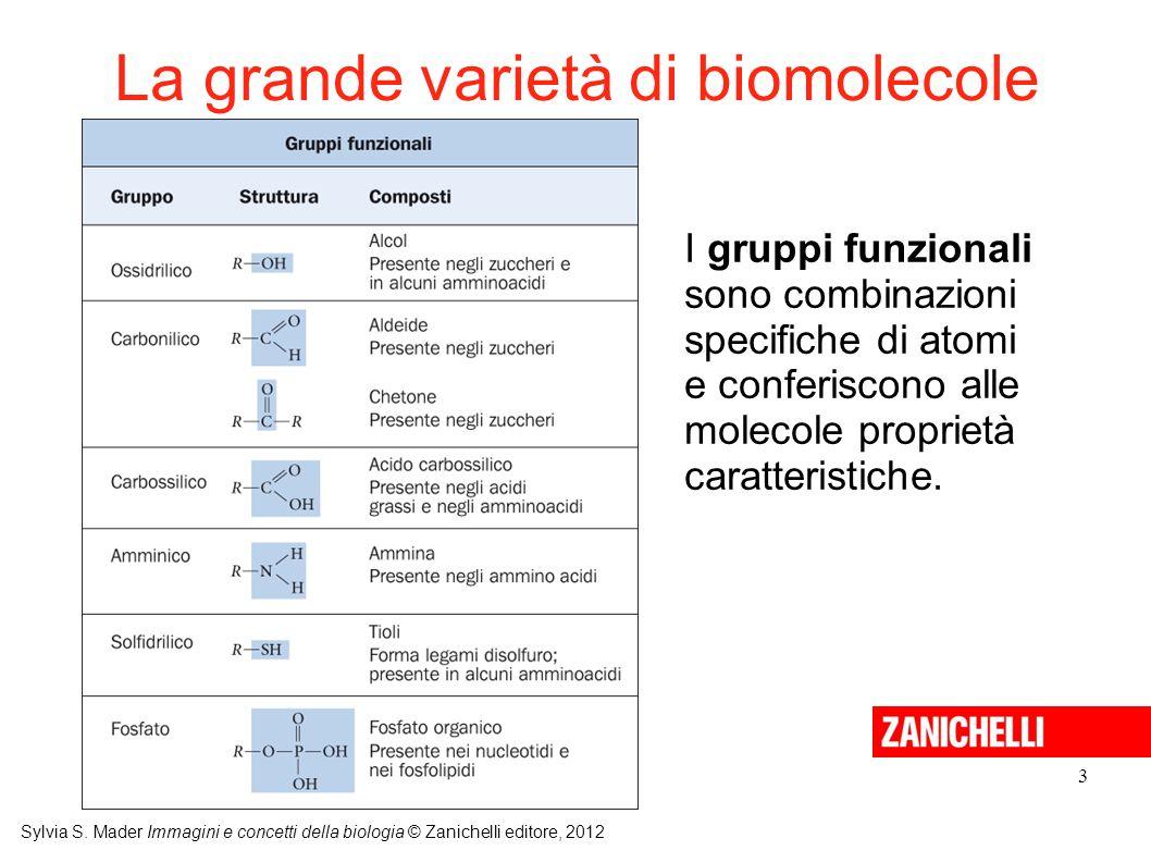 La grande varietà di biomolecole