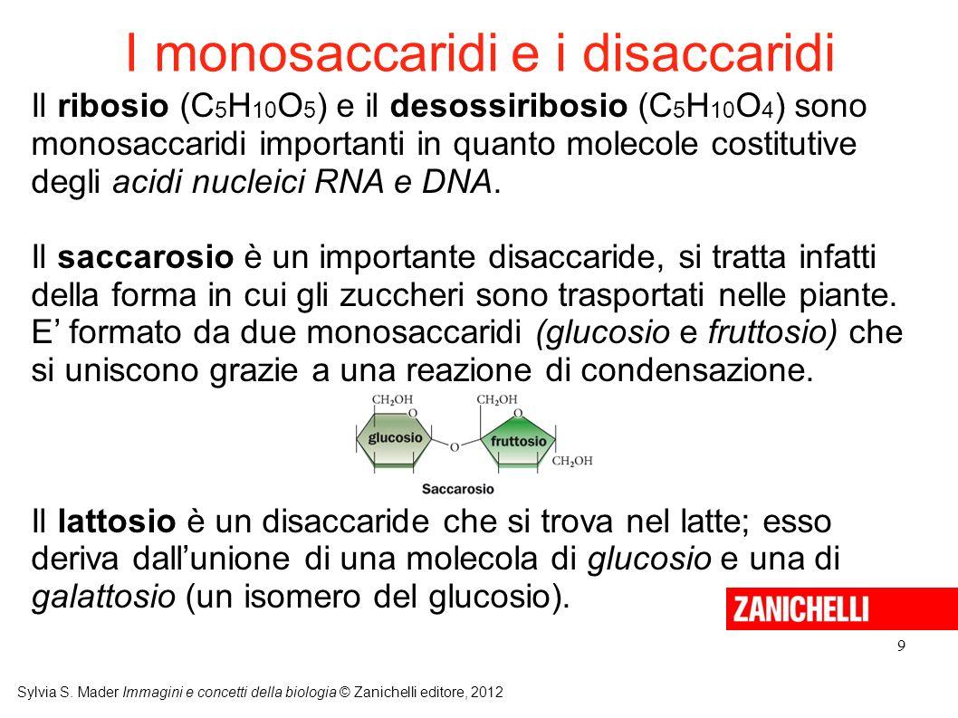 I monosaccaridi e i disaccaridi