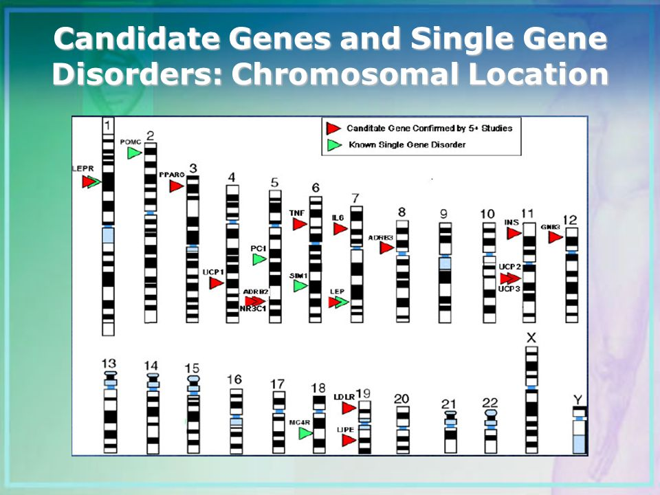 Candidate Genes and Single Gene Disorders: Chromosomal Location