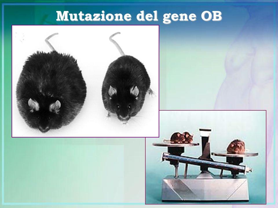 Mutazione del gene OB