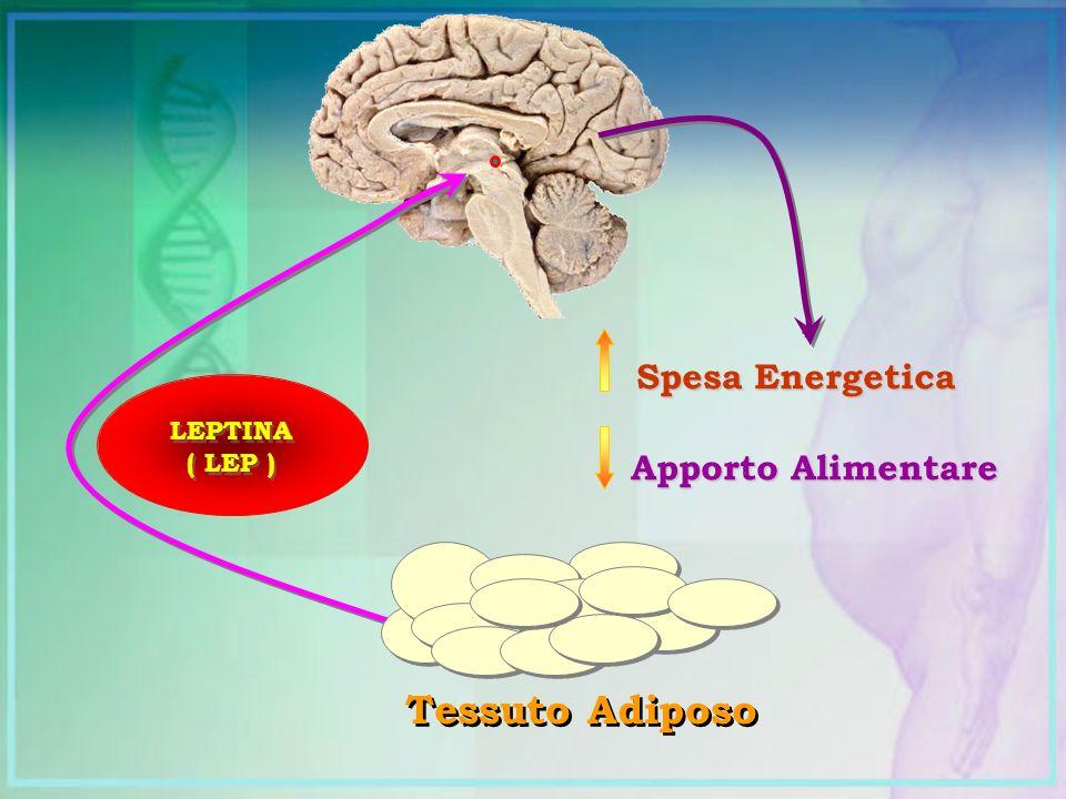 Spesa Energetica Apporto Alimentare LEPTINA ( LEP ) Tessuto Adiposo
