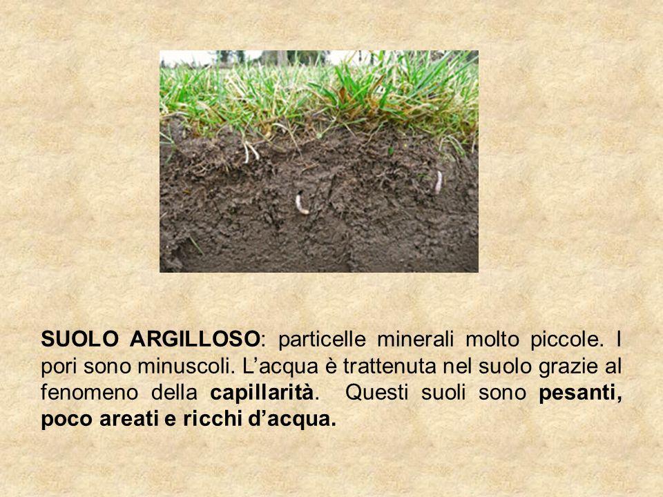 SUOLO ARGILLOSO: particelle minerali molto piccole