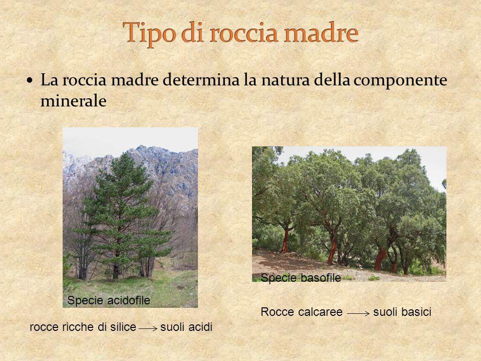 Tipo di roccia madre La roccia madre determina la natura della componente minerale. Specie basofile.