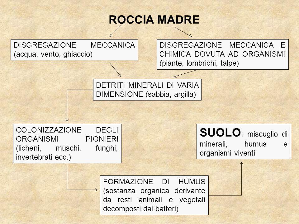 SUOLO: miscuglio di minerali, humus e organismi viventi