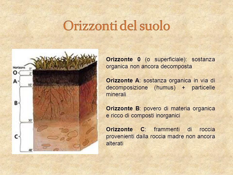 Orizzonti del suolo Orizzonte 0 (o superficiale): sostanza organica non ancora decomposta.