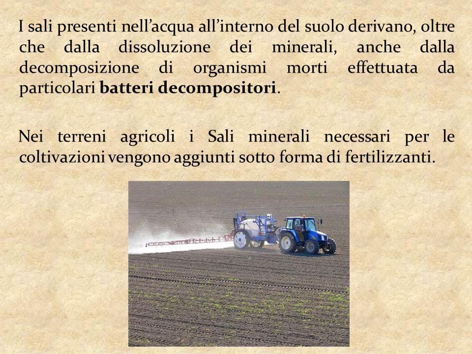 I sali presenti nell'acqua all'interno del suolo derivano, oltre che dalla dissoluzione dei minerali, anche dalla decomposizione di organismi morti effettuata da particolari batteri decompositori.