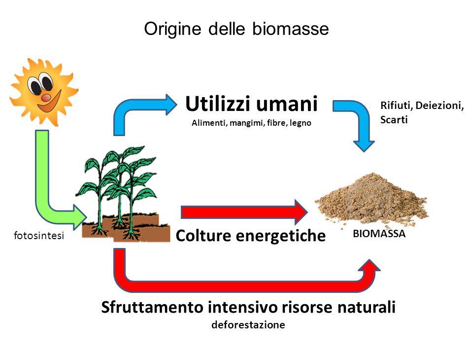 Utilizzi umani Origine delle biomasse Colture energetiche