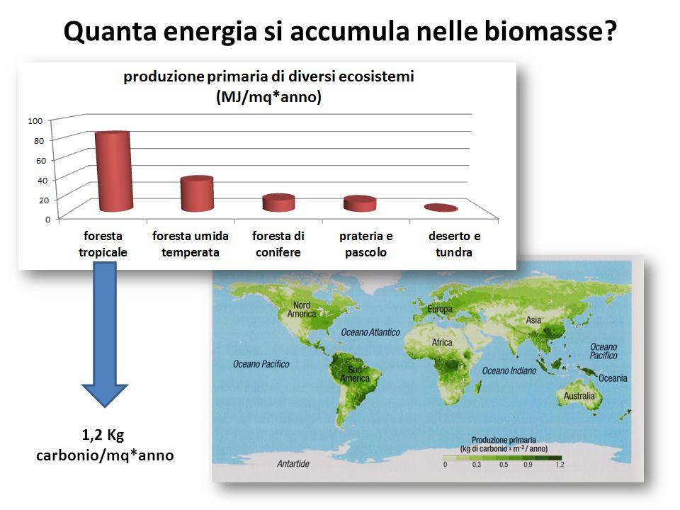 Quanta energia si accumula nelle biomasse