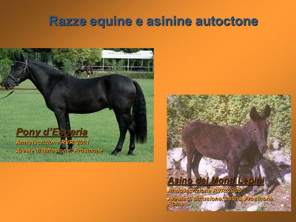 Razze equine e asinine autoctone