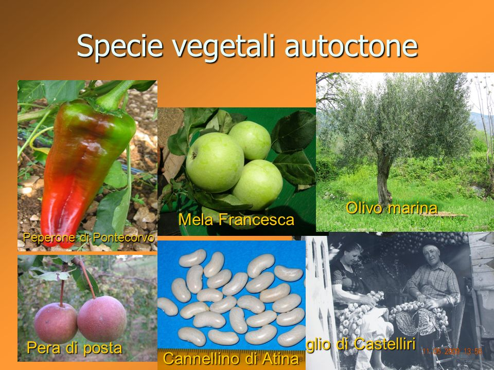 Specie vegetali autoctone