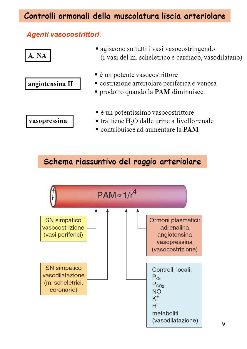 Regolazione della pressione arteriosa ppt video online for Quella del tavolo e liscia