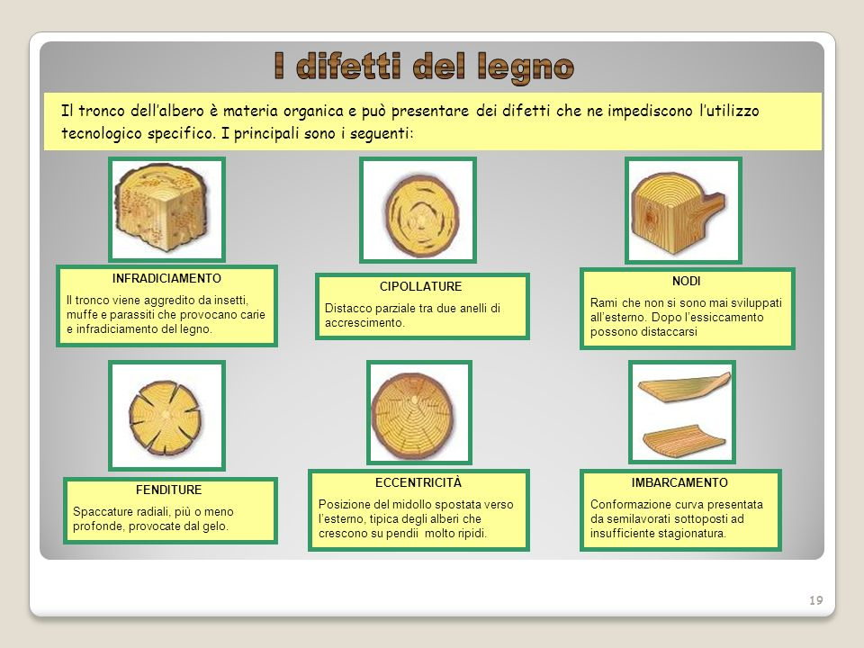 Istituto comprensivo statale mira 2 ppt video online for Case in legno difetti
