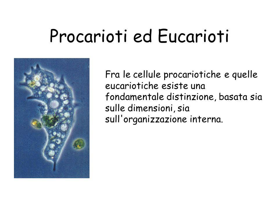 Procarioti ed Eucarioti