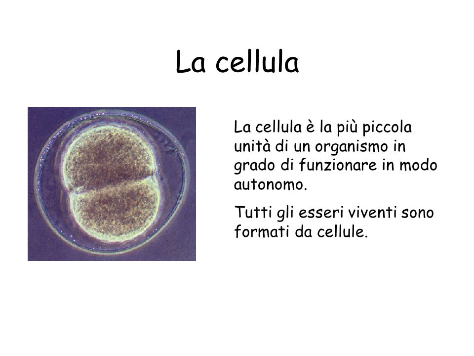 La cellula La cellula è la più piccola unità di un organismo in grado di funzionare in modo autonomo.