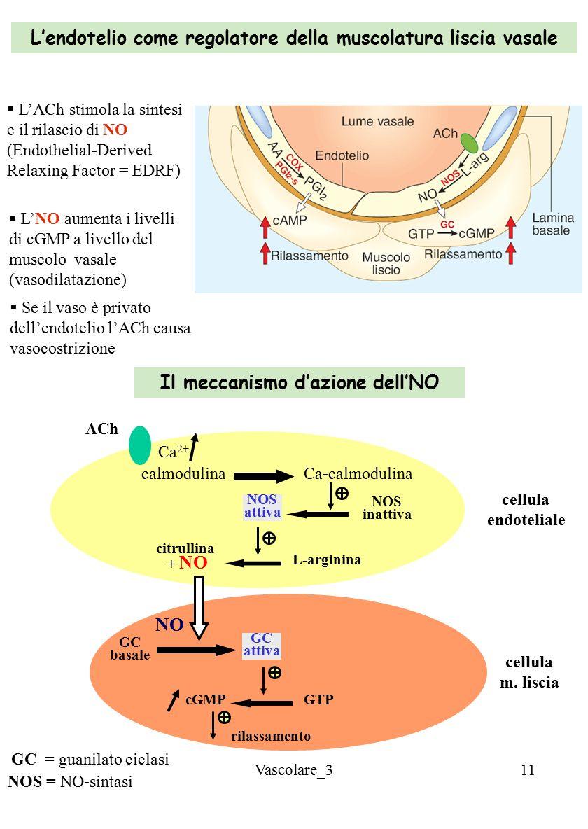 L'endotelio come regolatore della muscolatura liscia vasale