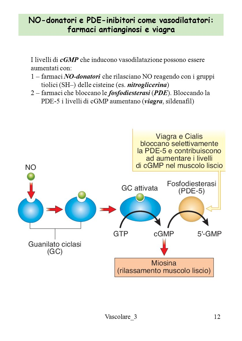 NO-donatori e PDE-inibitori come vasodilatatori: