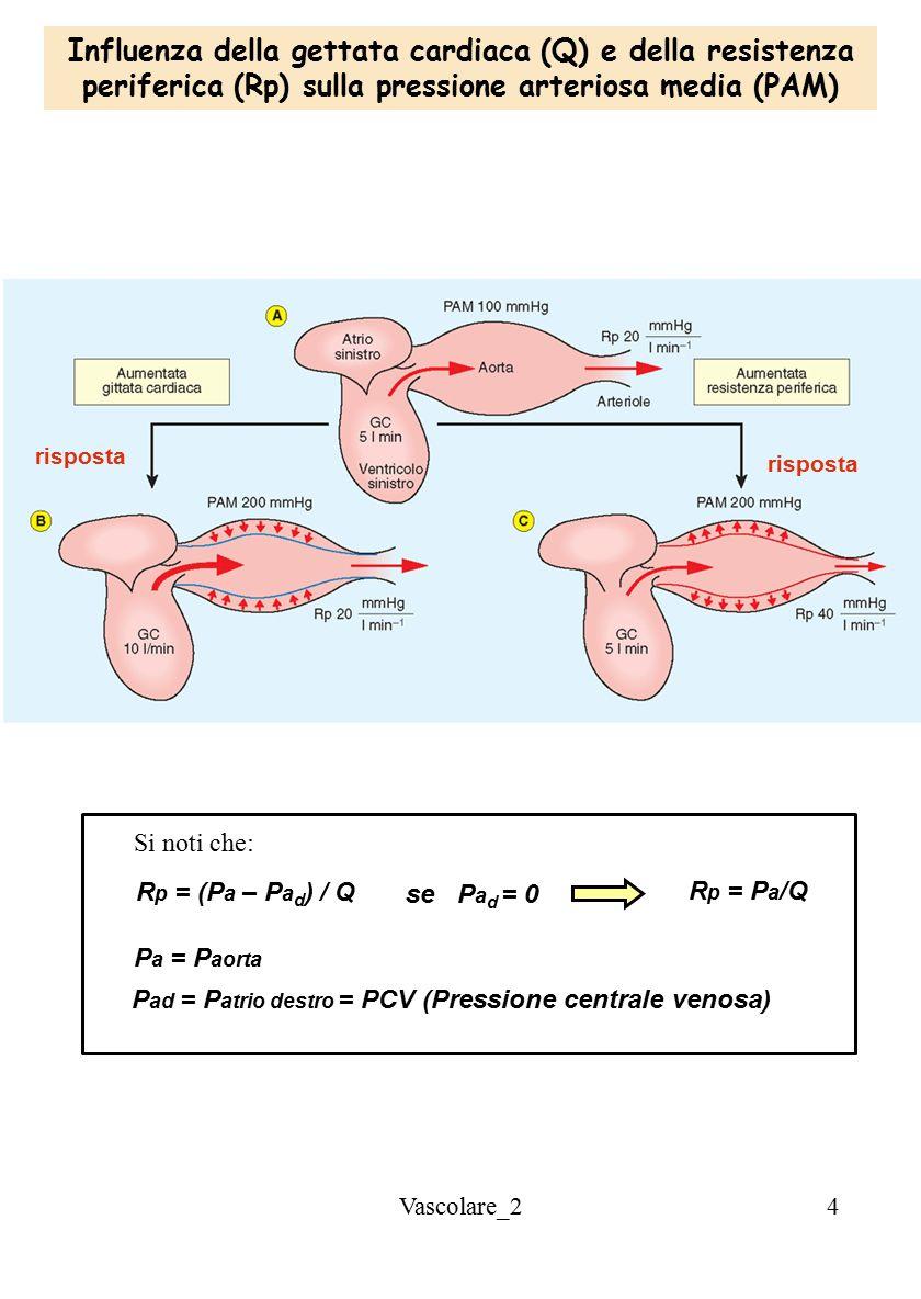 Influenza della gettata cardiaca (Q) e della resistenza periferica (Rp) sulla pressione arteriosa media (PAM)