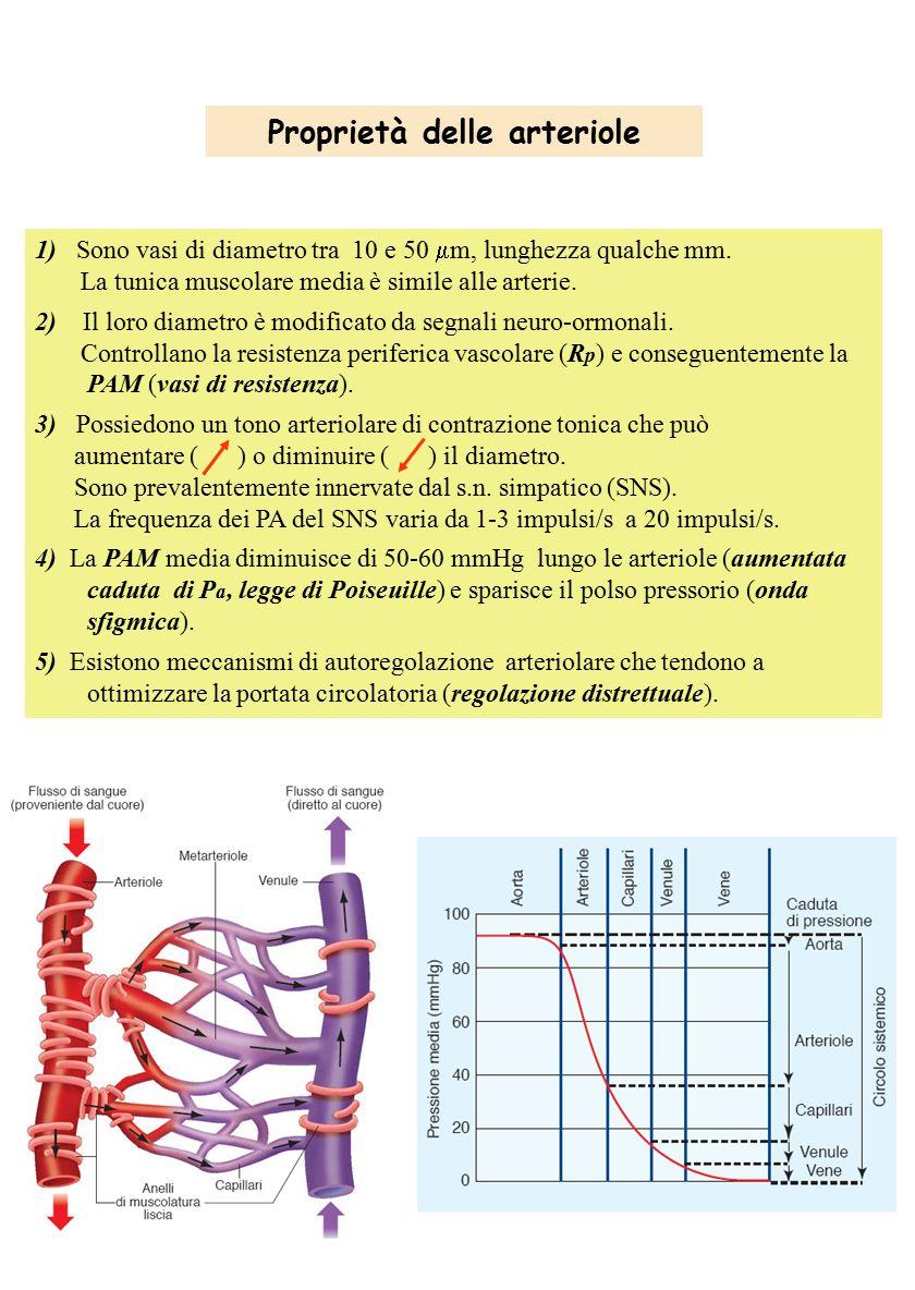 Proprietà delle arteriole