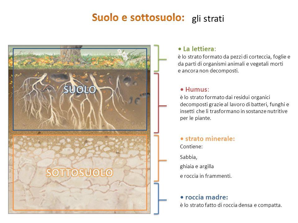 Suolo e sottosuolo: SUOLO SOTTOSUOLO