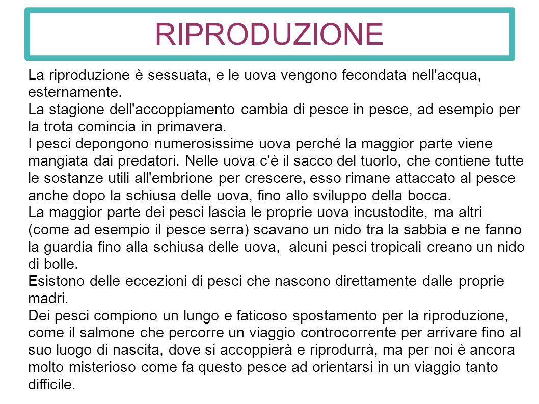 Pesci ppt scaricare for Uova di pesce rosso