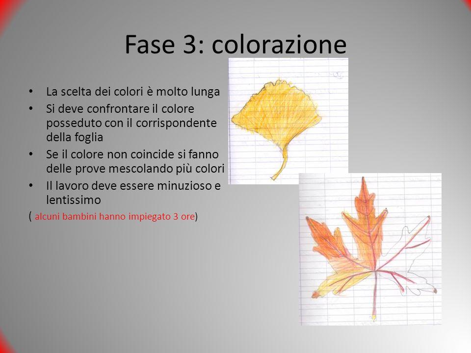 Fase 3: colorazione La scelta dei colori è molto lunga