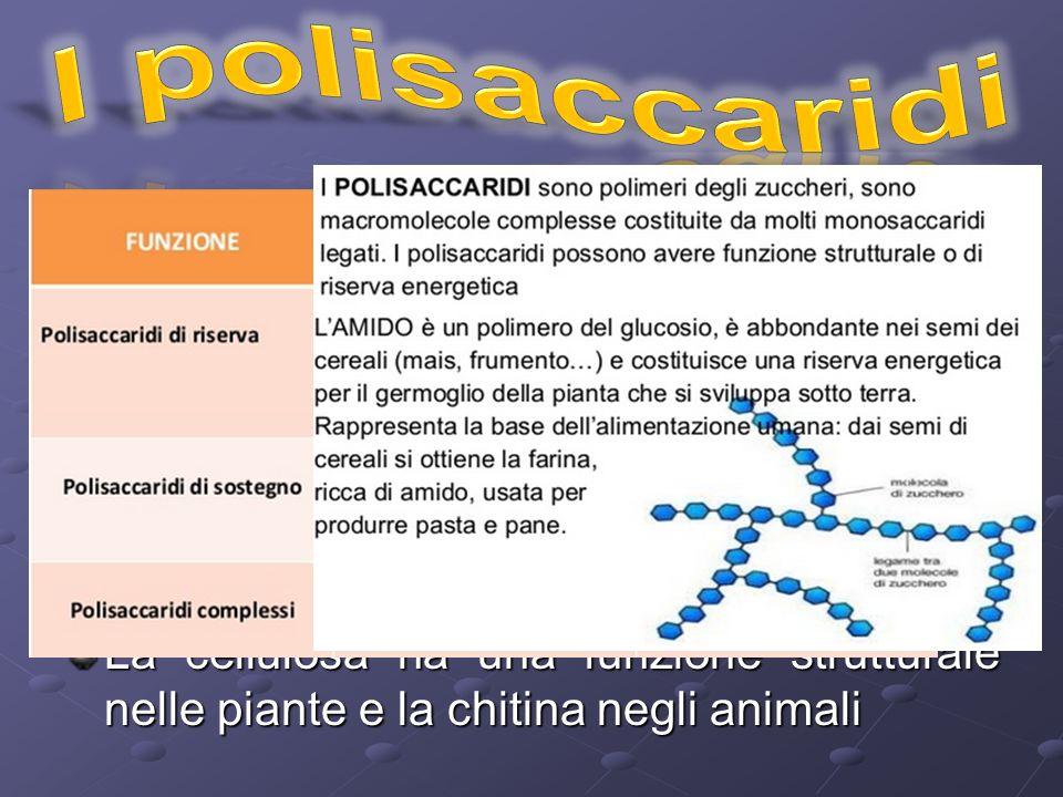I polisaccaridi I polisaccaridi sono polimeri di zuccheri semplici formati da più di 20 unità ripetitive insolubili in acqua.