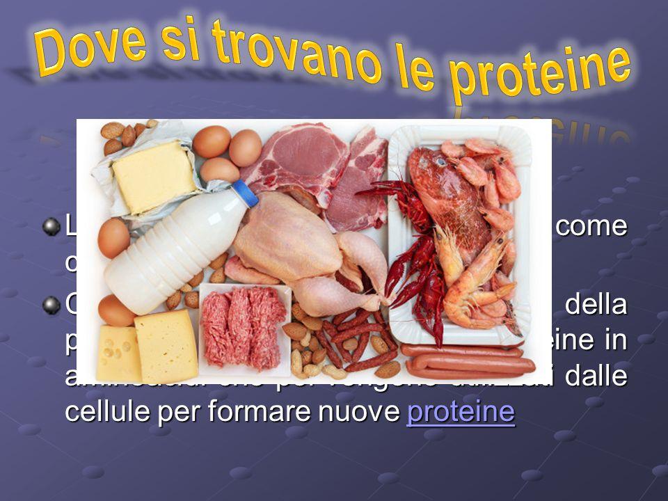 Dove si trovano le proteine