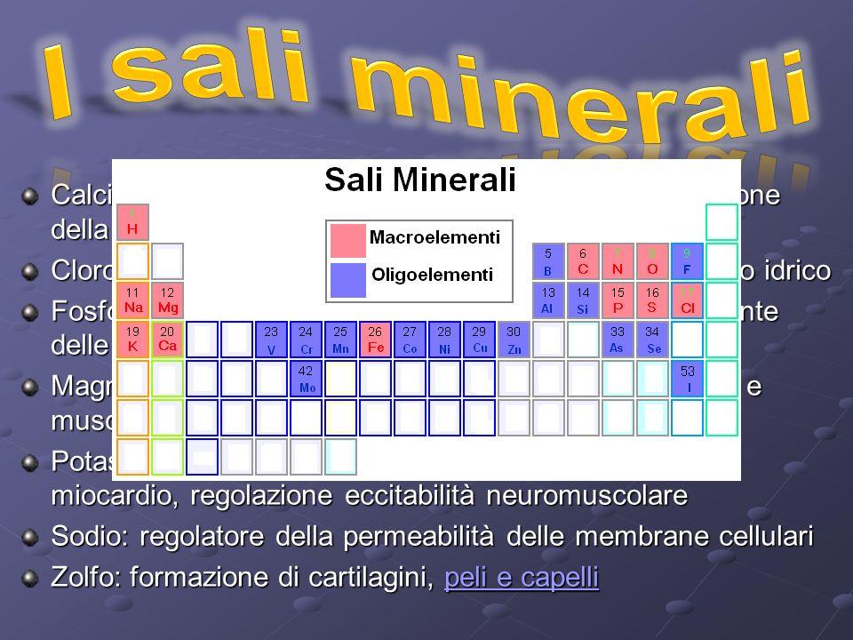 I sali minerali Calcio: costruzione dello scheletro e dei denti, regolazione della contrazione muscolare.