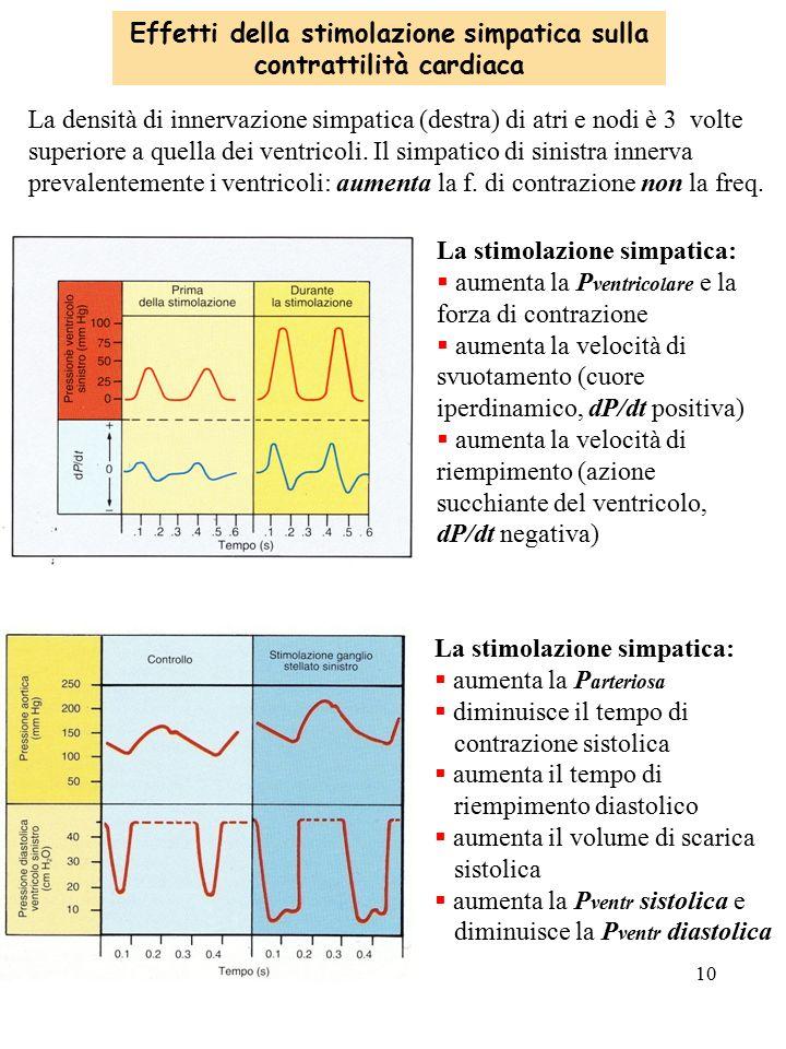 Effetti della stimolazione simpatica sulla contrattilità cardiaca