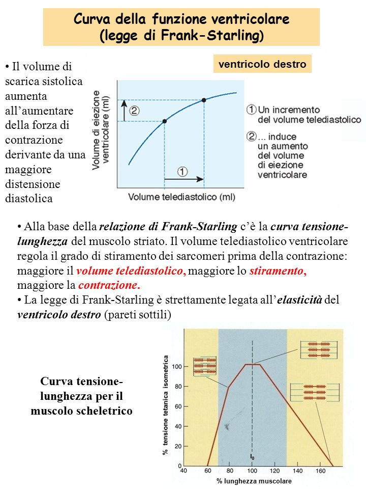 Curva della funzione ventricolare (legge di Frank-Starling)