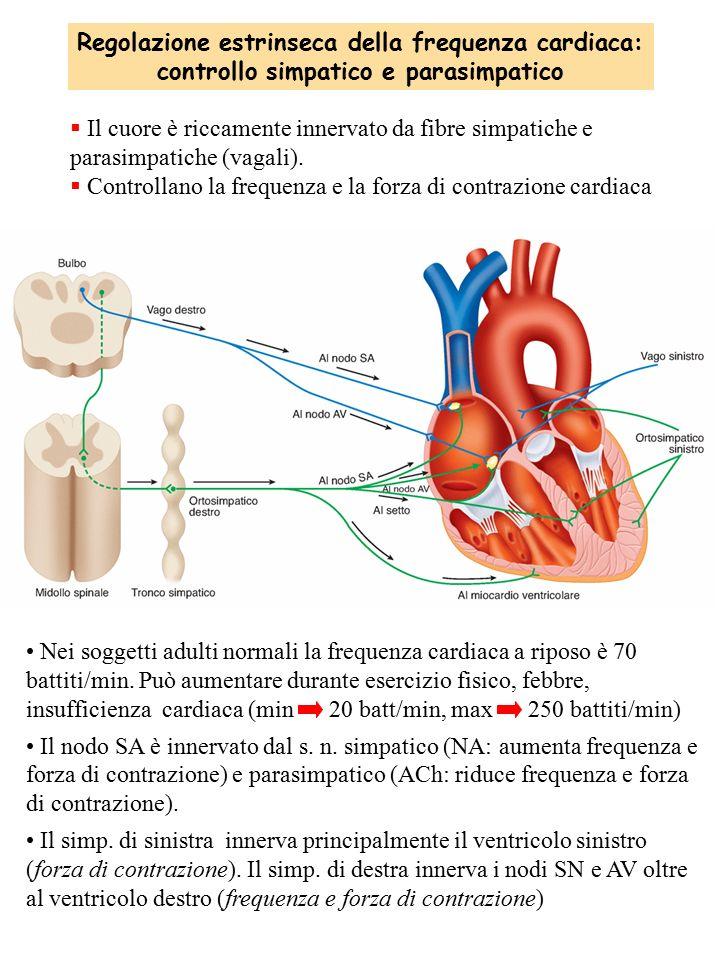 Regolazione estrinseca della frequenza cardiaca: