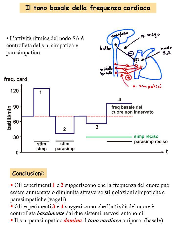 Il tono basale della frequenza cardiaca