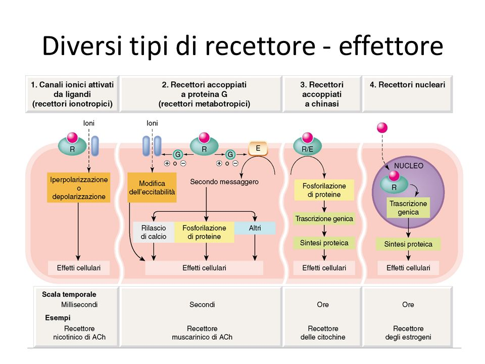 Diversi tipi di recettore effettore ppt scaricare - Diversi tipi di trecce ...