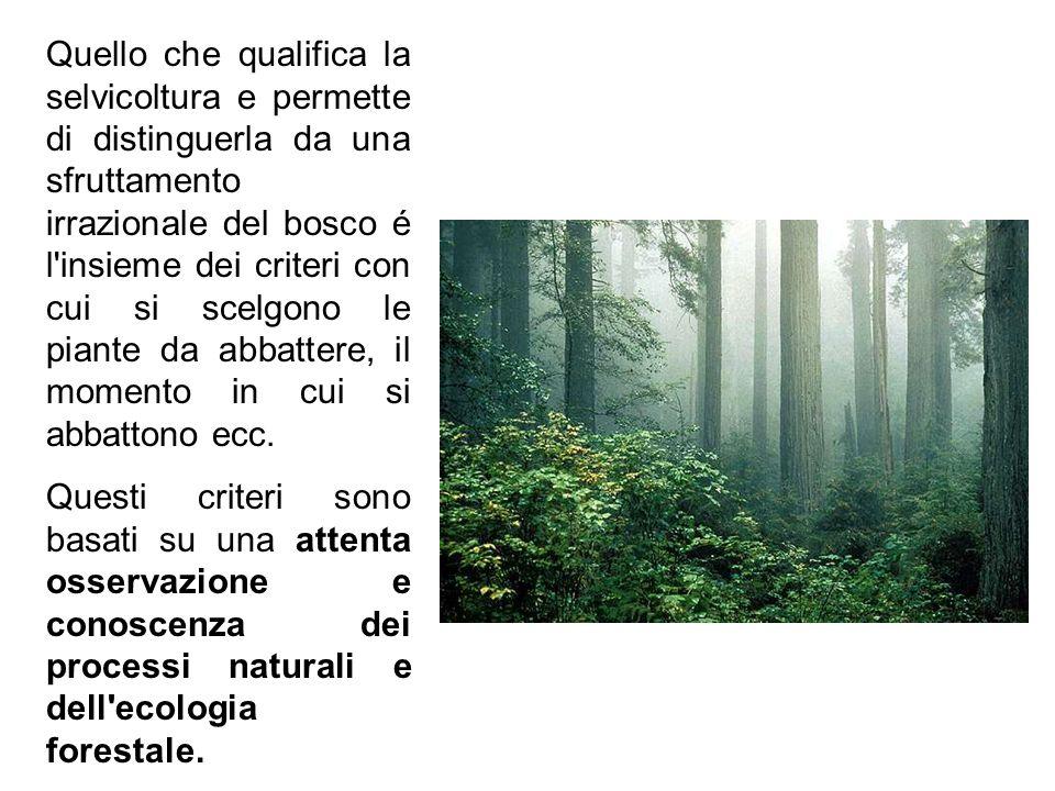 Quello che qualifica la selvicoltura e permette di distinguerla da una sfruttamento irrazionale del bosco é l insieme dei criteri con cui si scelgono le piante da abbattere, il momento in cui si abbattono ecc.