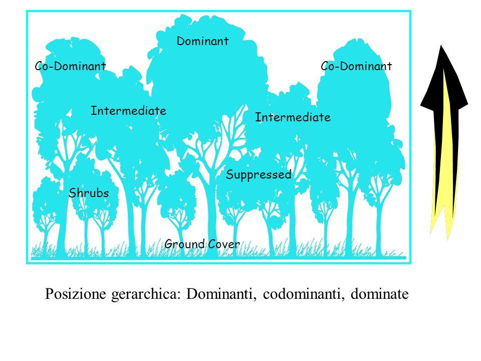 Posizione gerarchica: Dominanti, codominanti, dominate