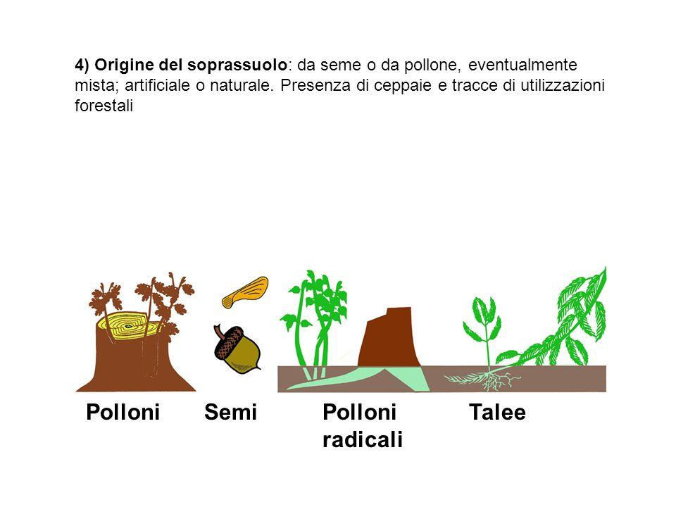 Semi Polloni Polloni radicali Talee