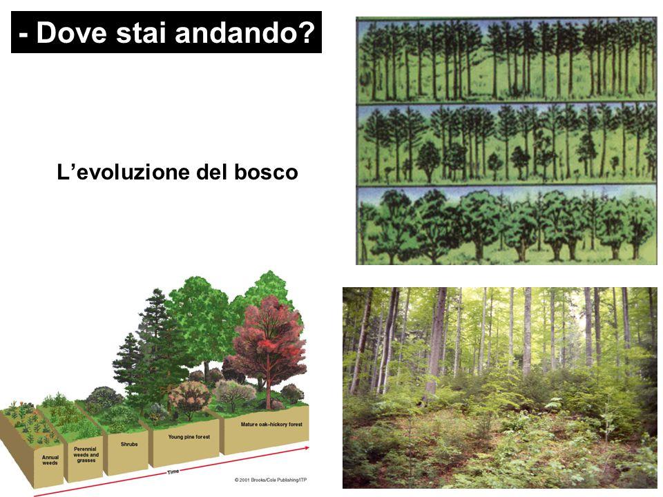 - Dove stai andando L'evoluzione del bosco