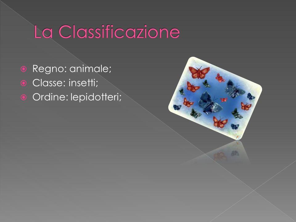 La Classificazione Regno: animale; Classe: insetti;