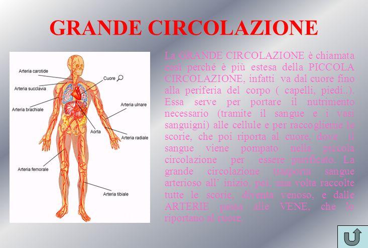GRANDE CIRCOLAZIONE