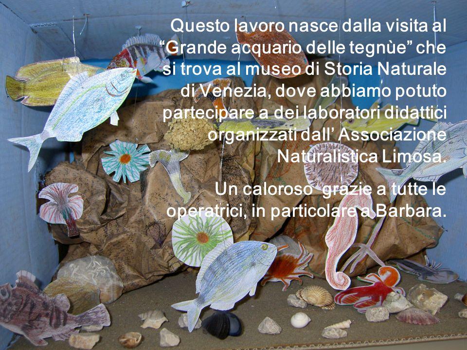 Questo lavoro nasce dalla visita al Grande acquario delle tegnùe che si trova al museo di Storia Naturale di Venezia, dove abbiamo potuto partecipare a dei laboratori didattici organizzati dall' Associazione Naturalistica Limosa.
