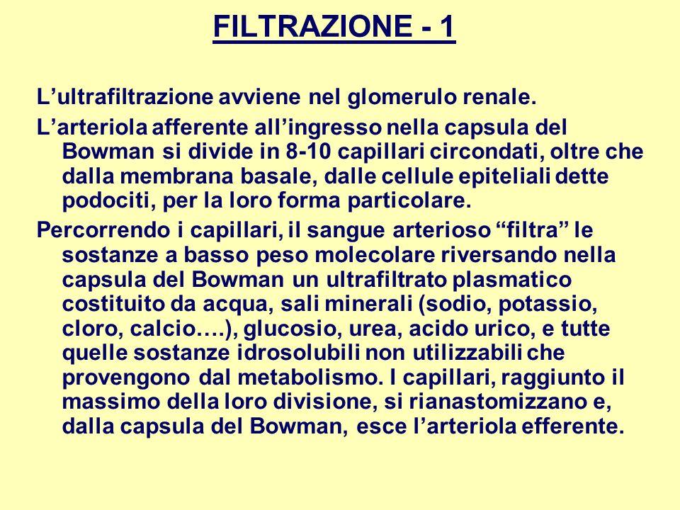 FILTRAZIONE - 1 L'ultrafiltrazione avviene nel glomerulo renale.