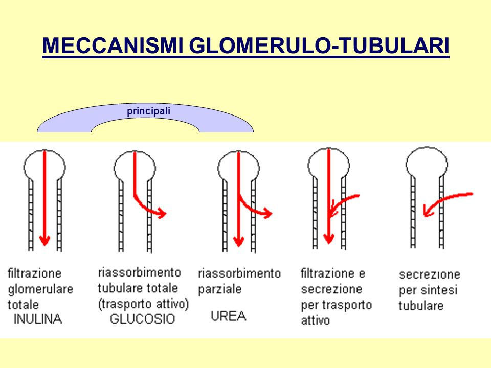 MECCANISMI GLOMERULO-TUBULARI