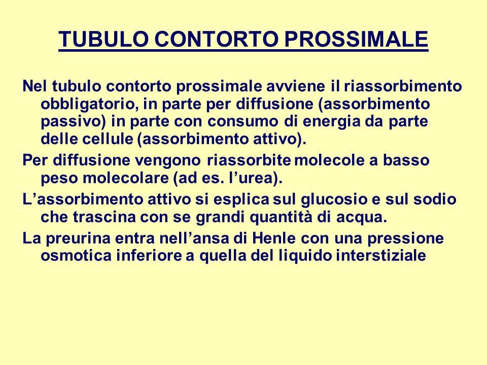 TUBULO CONTORTO PROSSIMALE