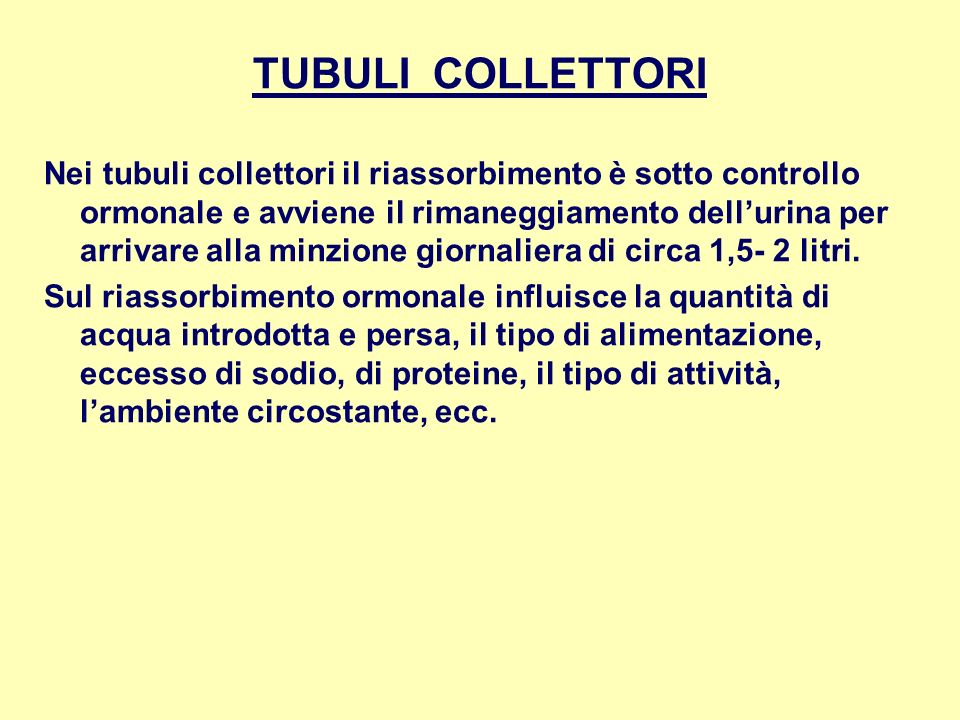 TUBULI COLLETTORI