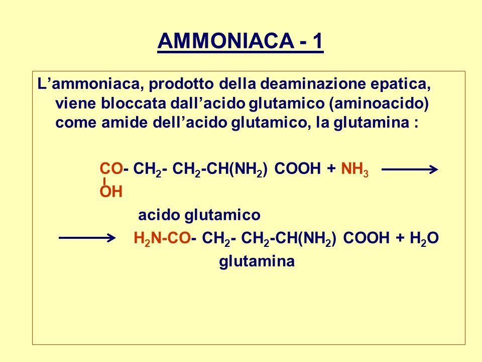 AMMONIACA - 1