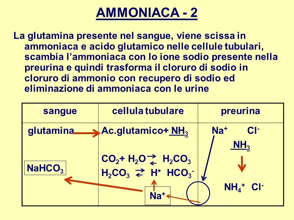 AMMONIACA - 2
