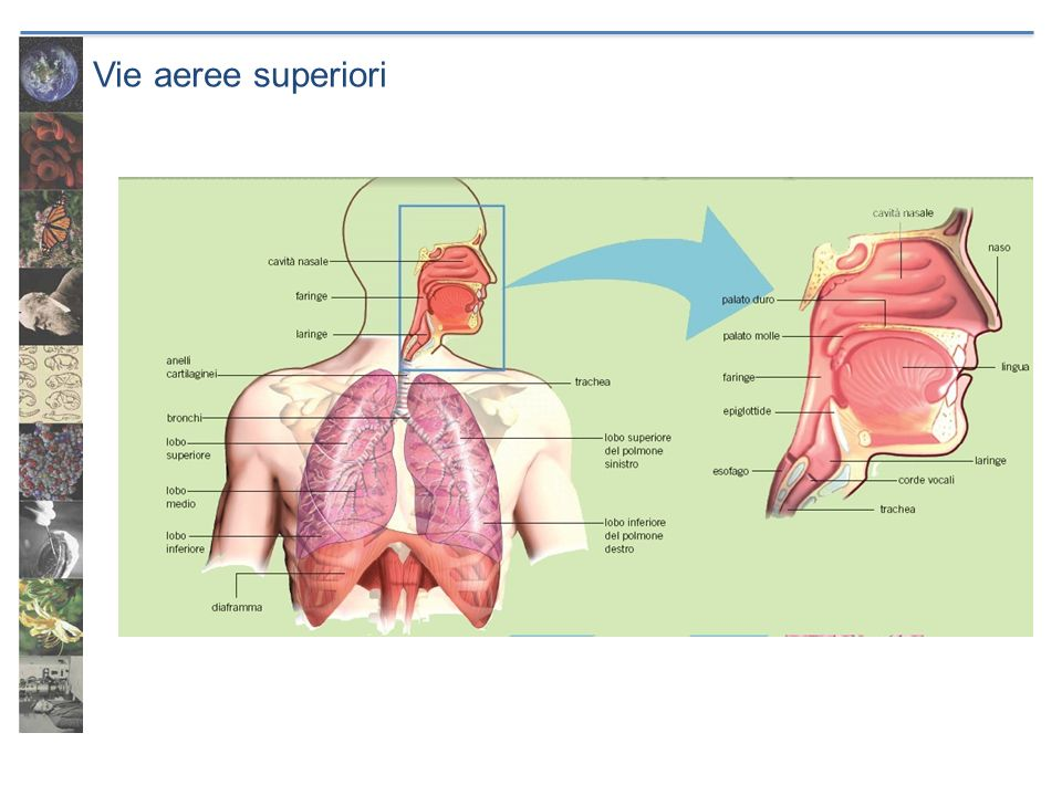 Vie aeree superiori