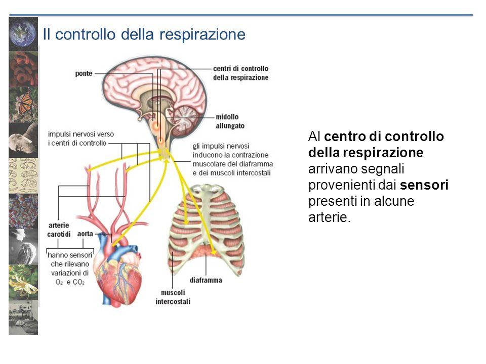 Il controllo della respirazione